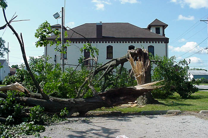 Large tree broken by severe wind